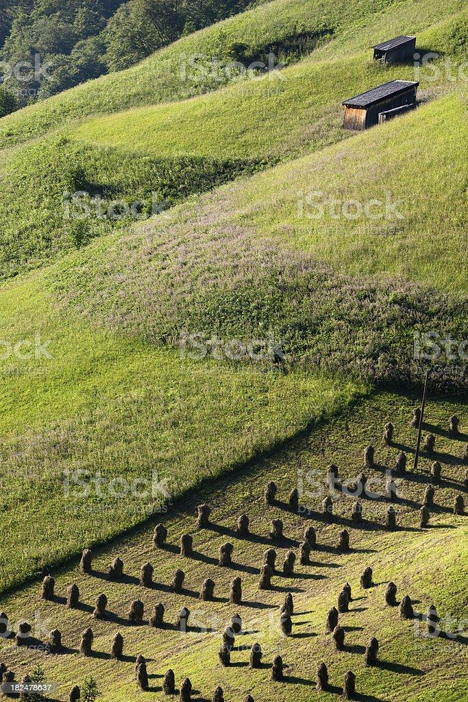 hey harvesting in tirol stock photo