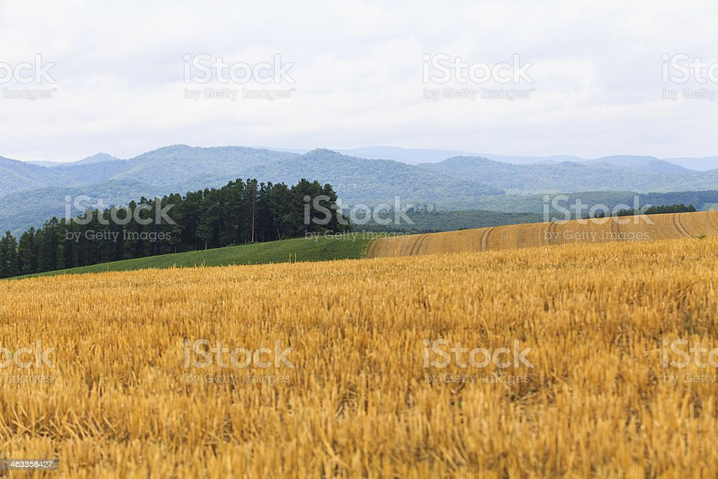 Hey in field with sky. stock photo
