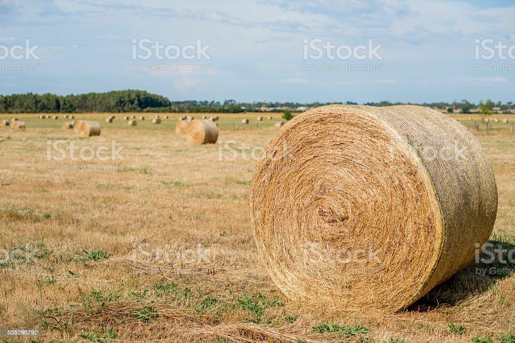 hey rolls 1 stock photo