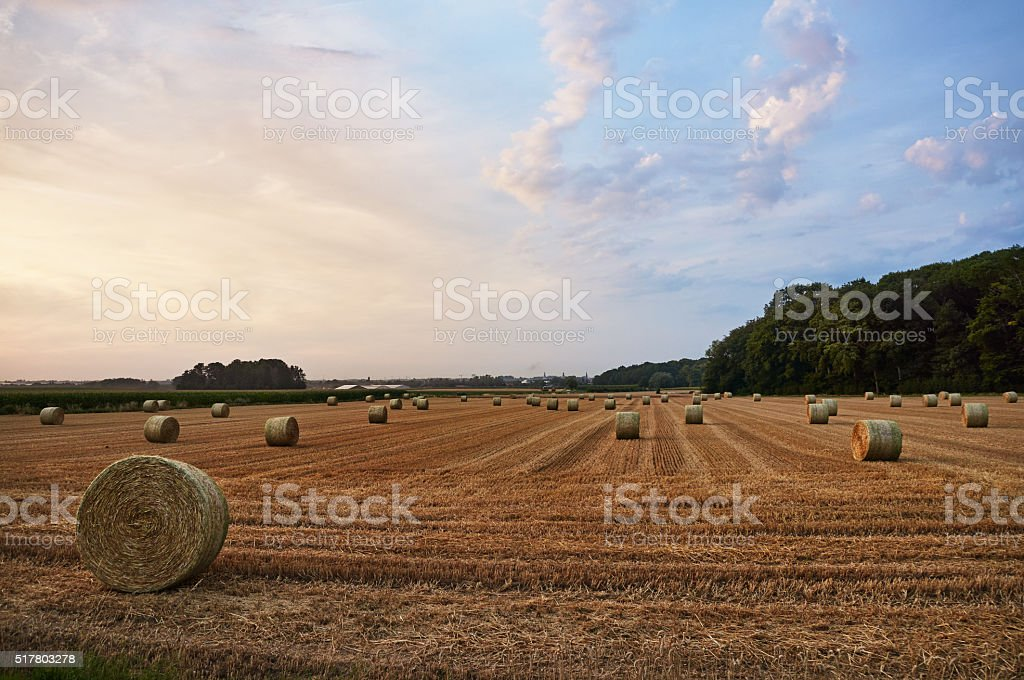 Hey stack on the farm field in Belgium, Europe stock photo
