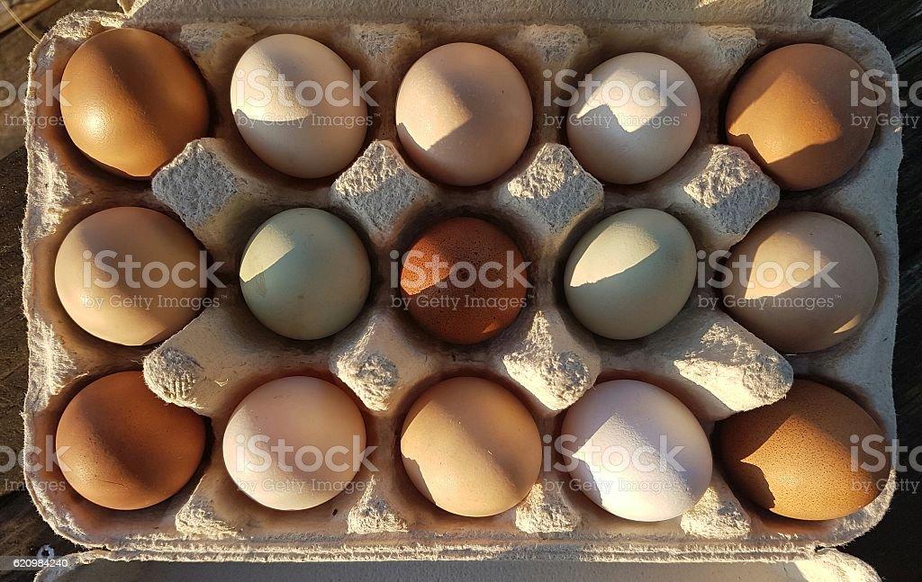 hühnereier stock photo