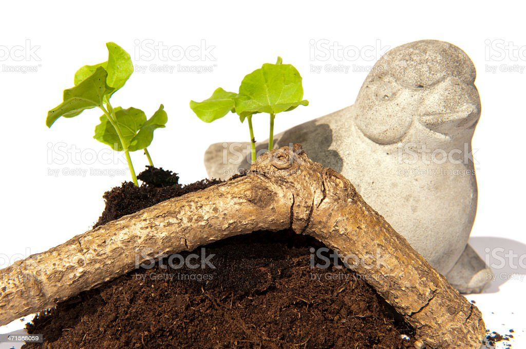 Hibiscus cuttings stone bird and branch stock photo