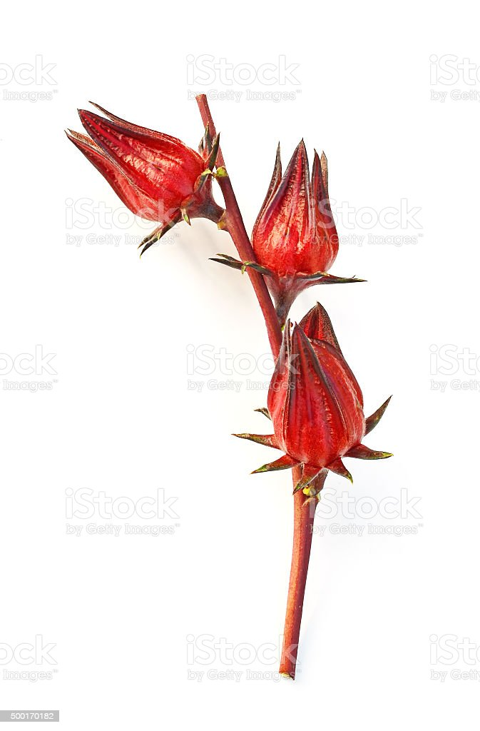 Hibiscus sabdariffa or roselle fruits stock photo