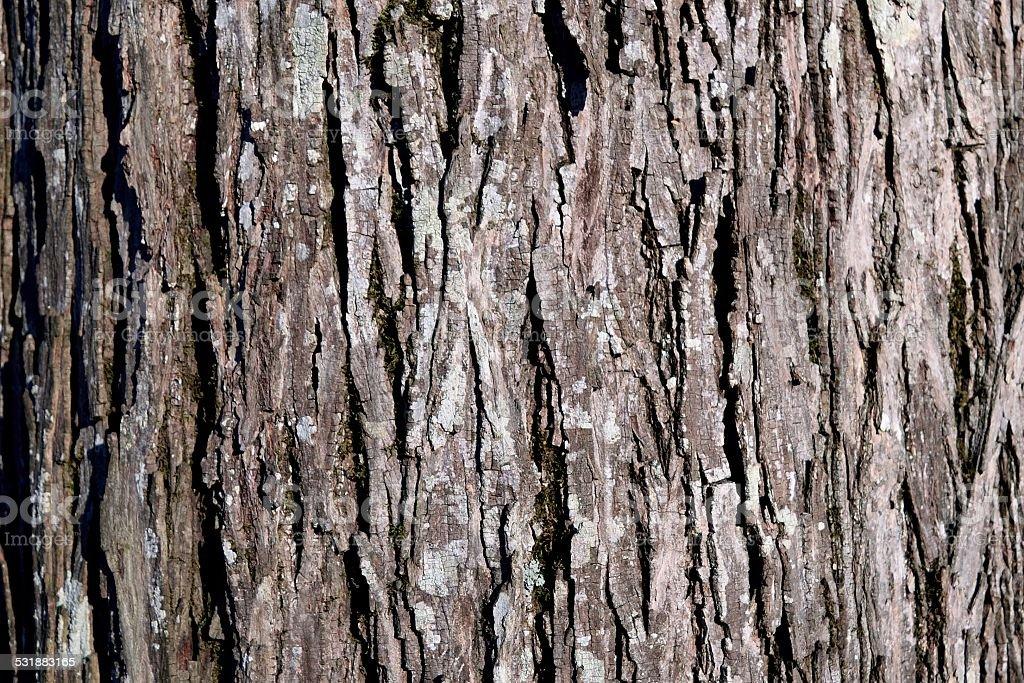 Hickory bark stock photo
