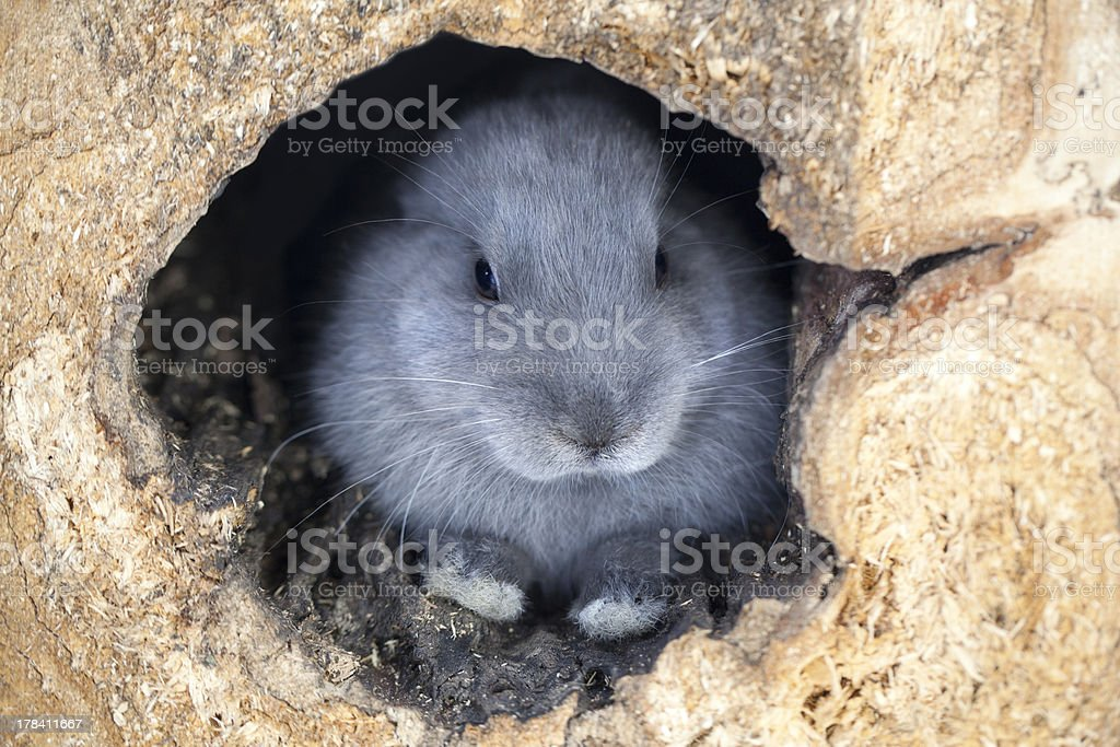 Hidden Bunnny stock photo