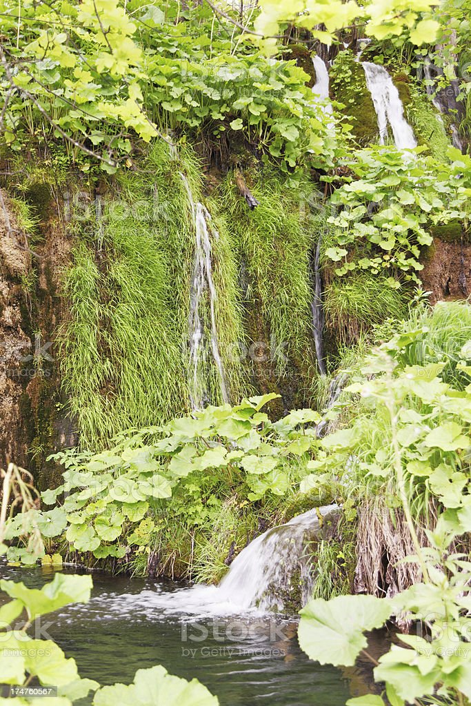 hidden cascade forest streaming water leaves through trees Plitvice Croatia royalty-free stock photo