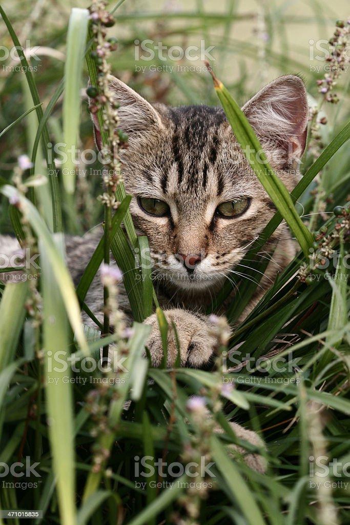Hidden Kitty royalty-free stock photo