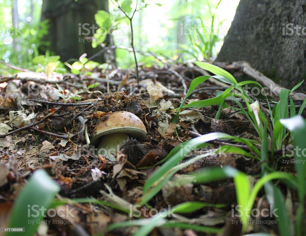 Hidden mushroom stock photo