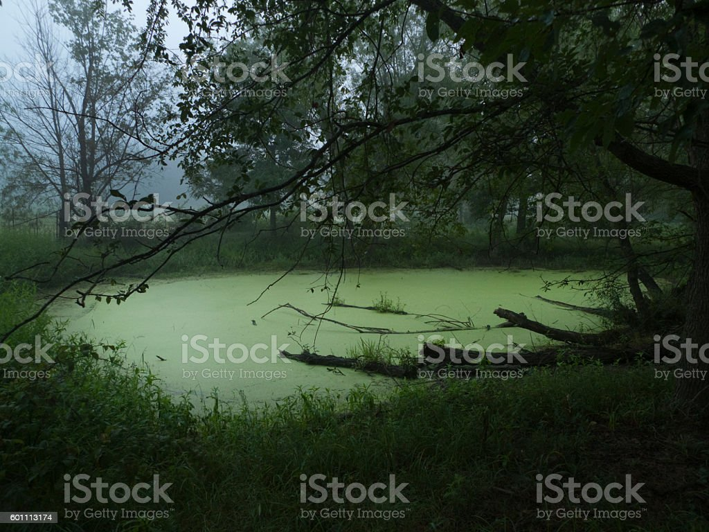 Hidden pond in the forest stock photo