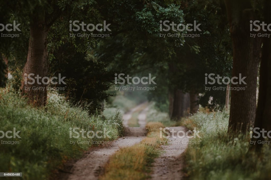 Hidden way through the green forest in summer stock photo
