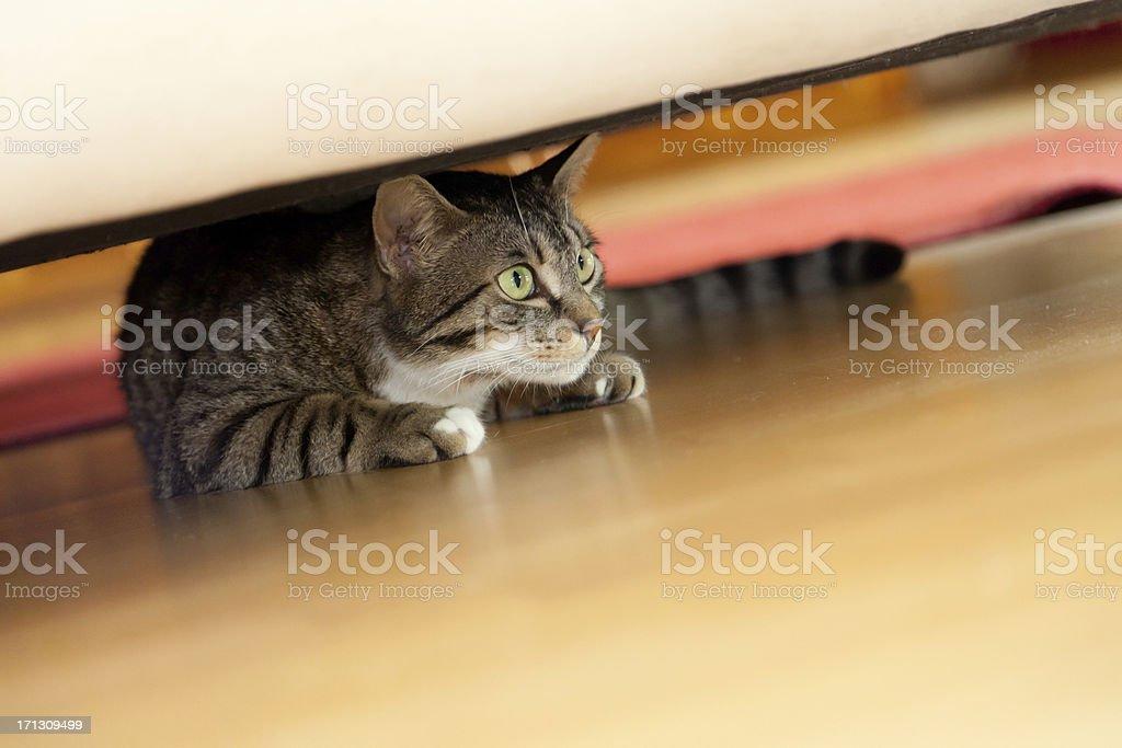 hiding cat stock photo