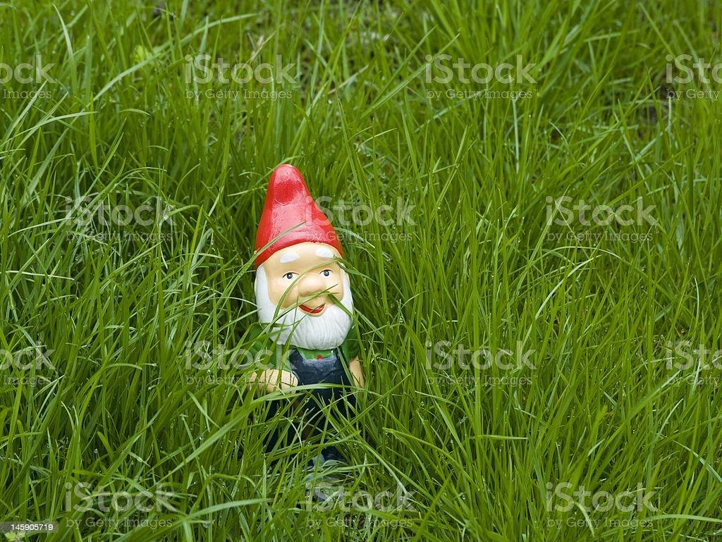 Hiding Garden Gnome stock photo