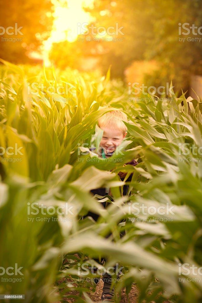 Hiding in the corn field stock photo
