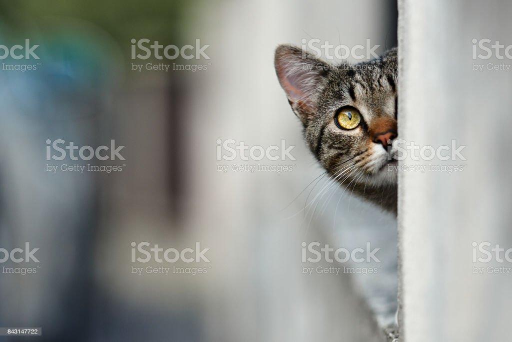 hiding kitty looking up stock photo