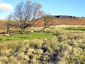 Higger Tor, Derbyshire.