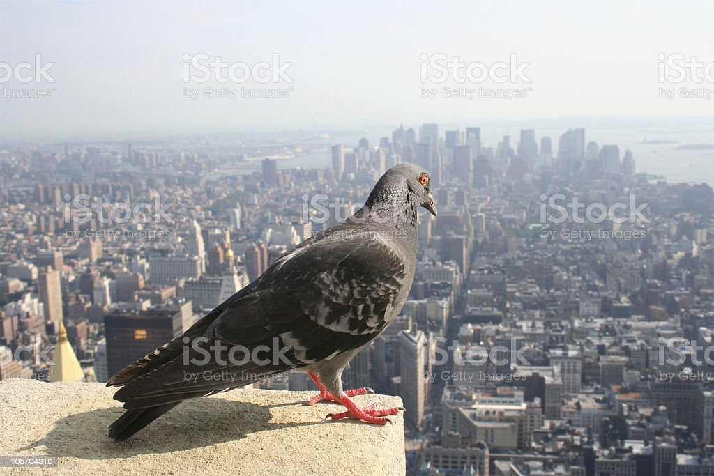 high above manhattan royalty-free stock photo