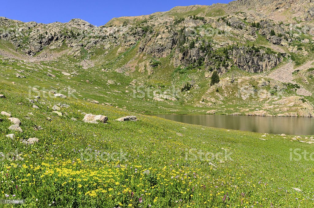 High Alpine Lake and Summer Wildflower Meadow royalty-free stock photo