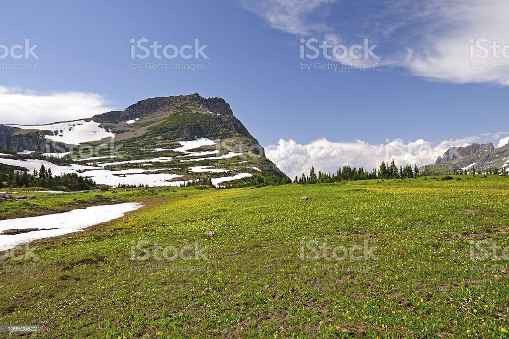 High Alpine Meadow in the Summer stock photo
