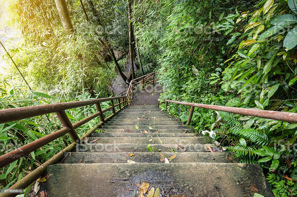 High and steep stairs inside forest stock photo