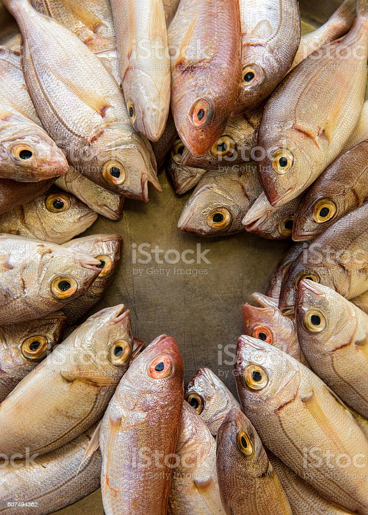High angle view of large group of fishes stock photo