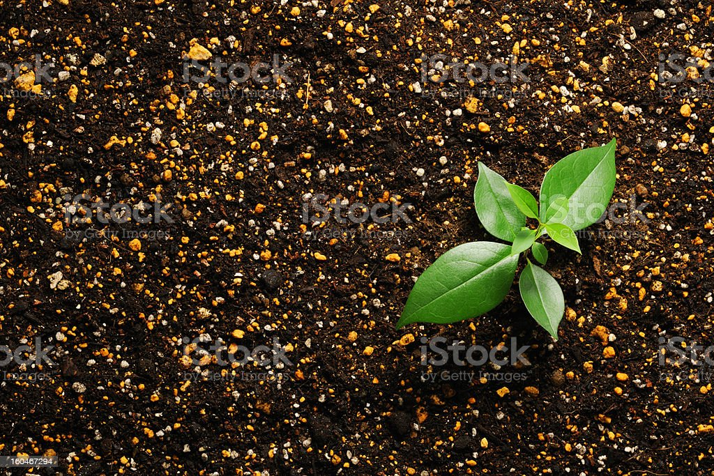 High angle view of new plant life with copy space royalty-free stock photo
