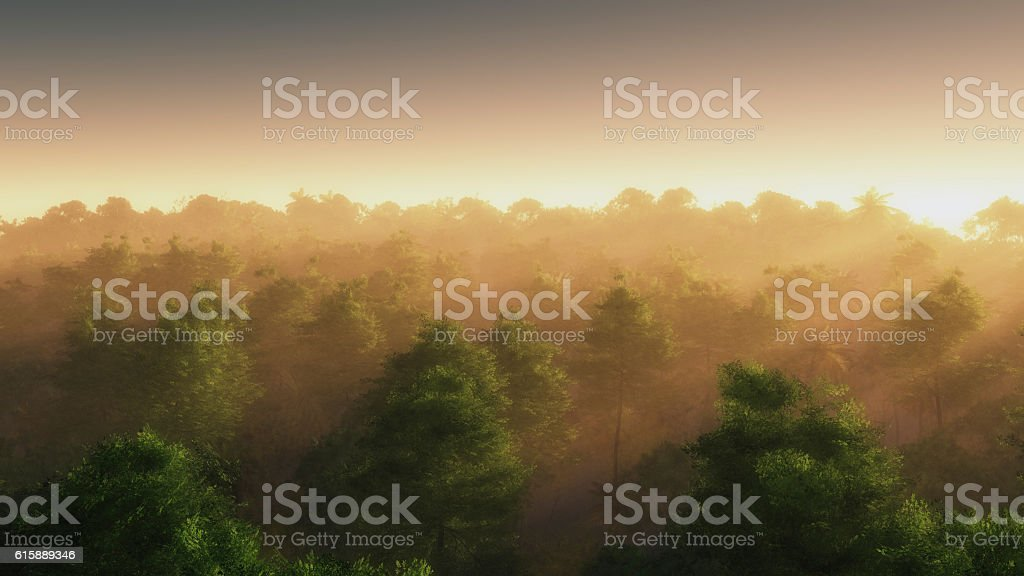 High angle view of summer forest in mist. stock photo