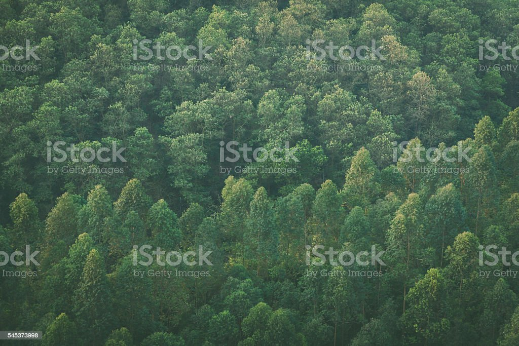 High angle view of tree canopy stock photo