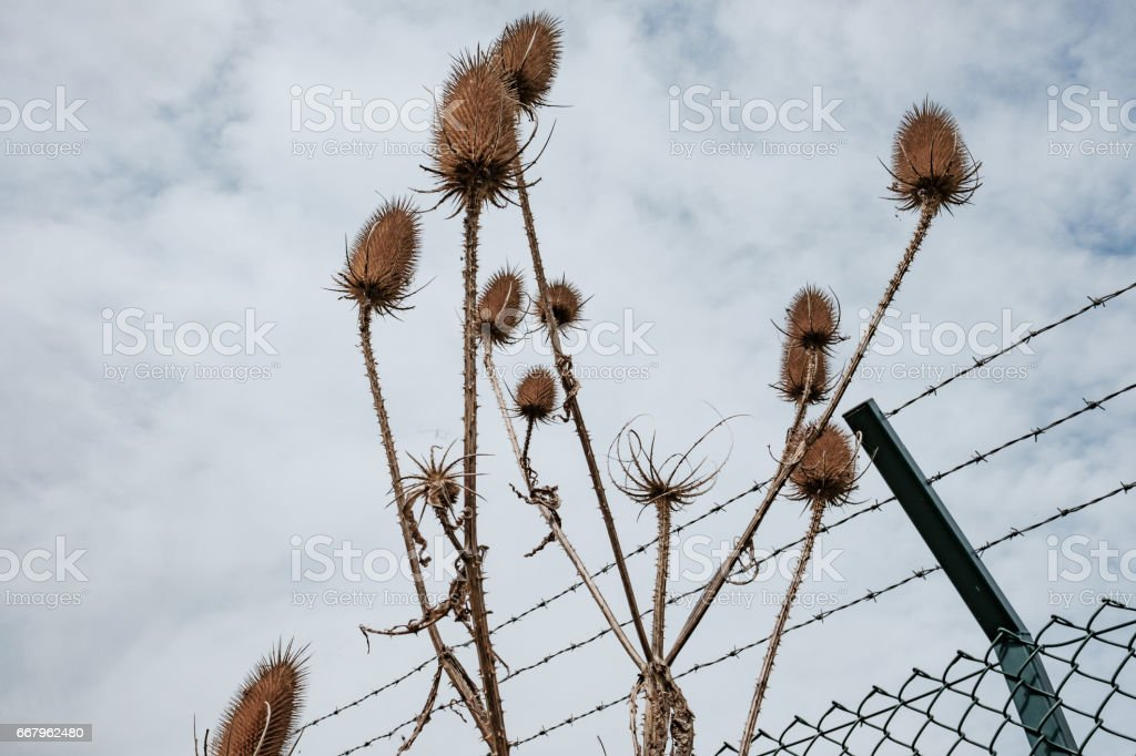 High barbed wire perimeter fence seen installed around a large, and out of view signals intelligence base used by the western powers. stock photo