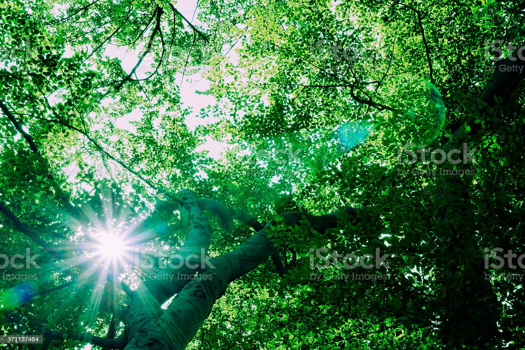 High Energy Forest stock photo