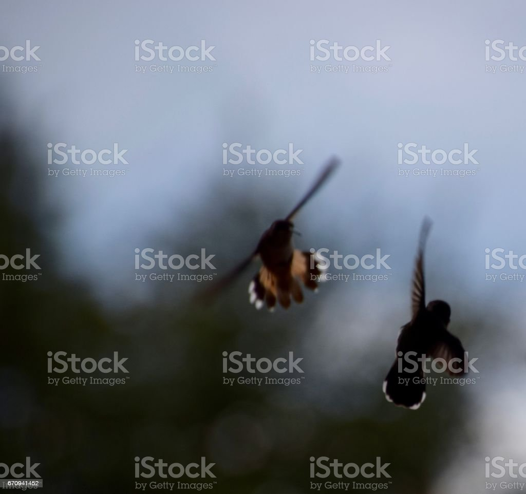 high five hummers stock photo