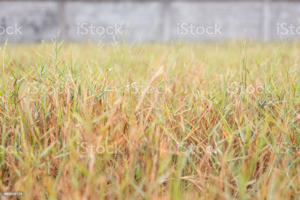High grass against concrete wall background stock photo