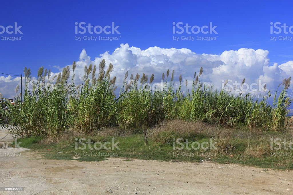 High grass and clouded sky royalty-free stock photo