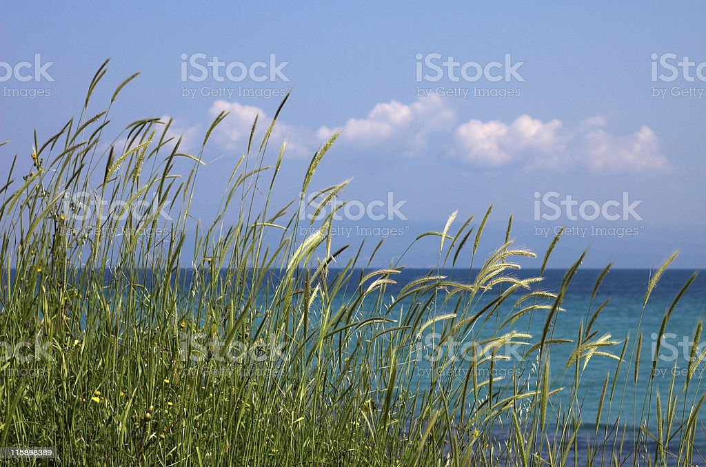 High grass and clouds royalty-free stock photo
