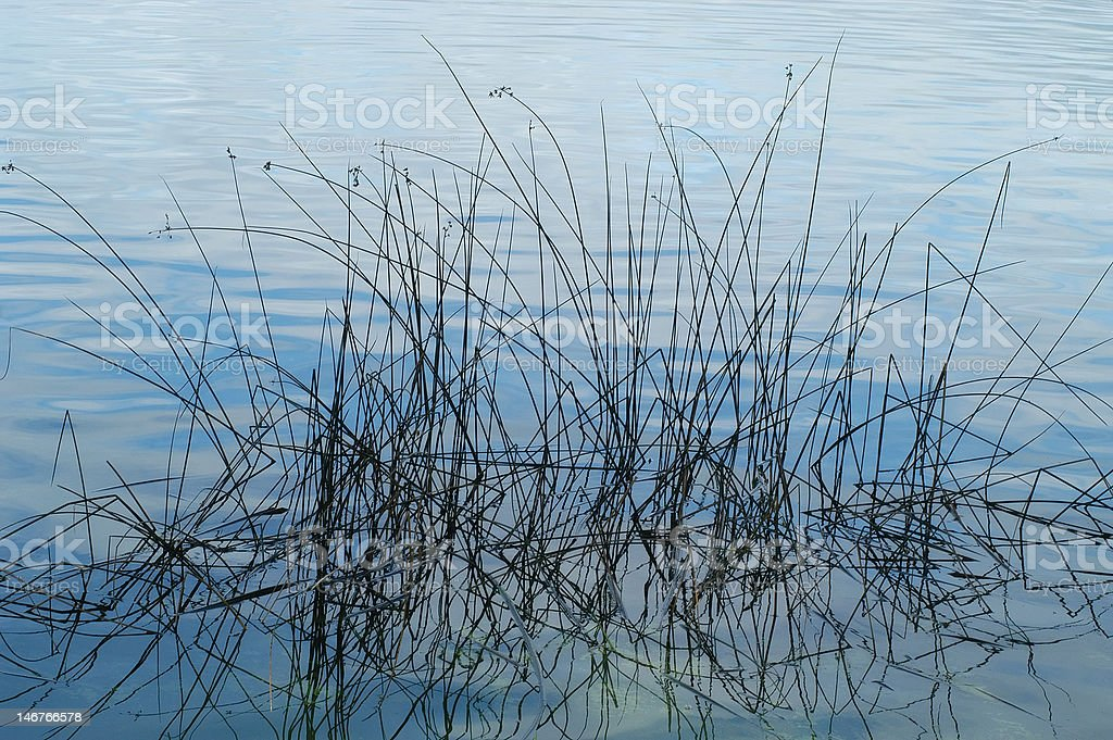High Grass in the Lake royalty-free stock photo
