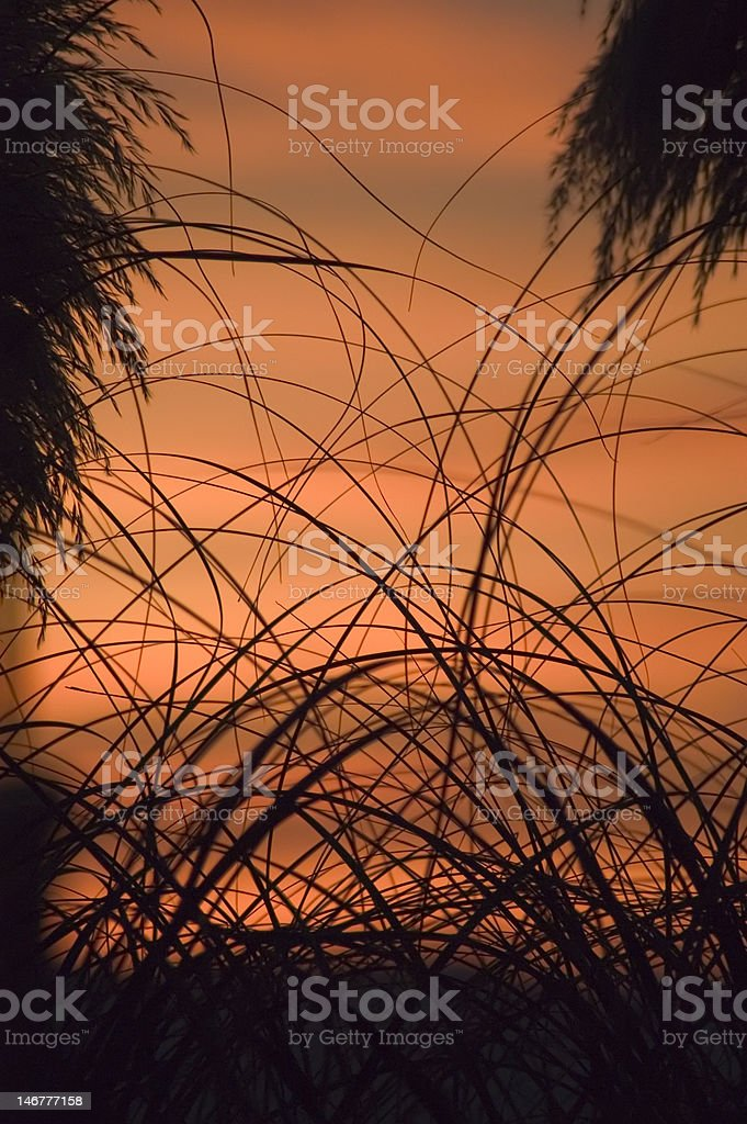 High Grass on Red royalty-free stock photo