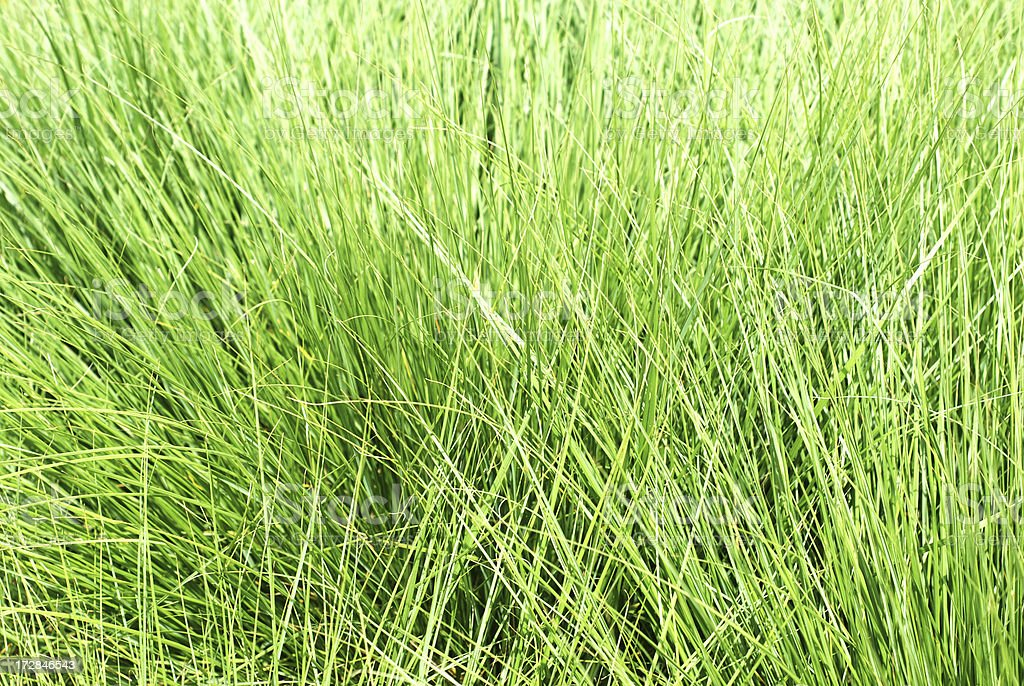 high grass royalty-free stock photo