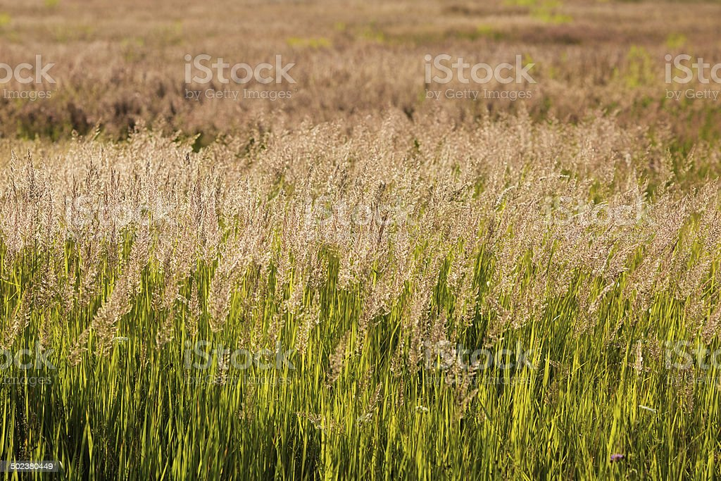 High green grass field royalty-free stock photo