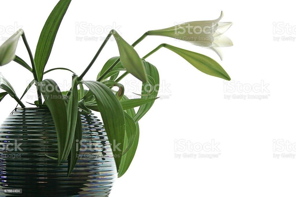 high key flower royalty-free stock photo