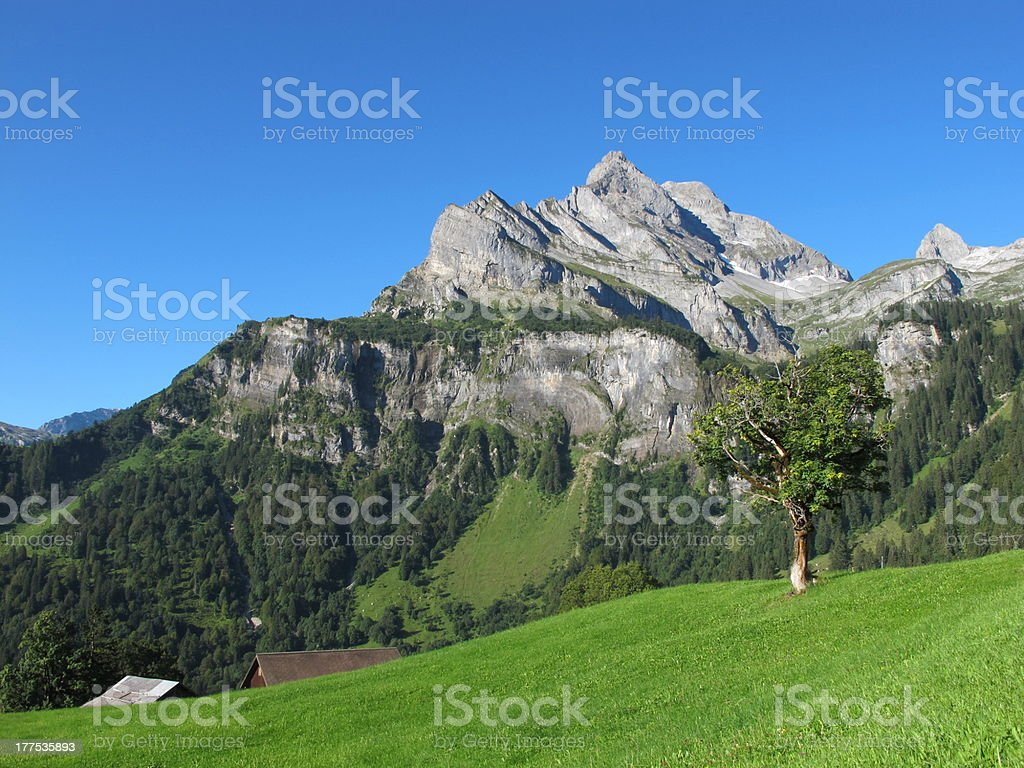 High Mountain, Green Meadow With Tree stock photo