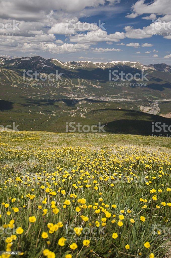 High Mountain Meadow stock photo