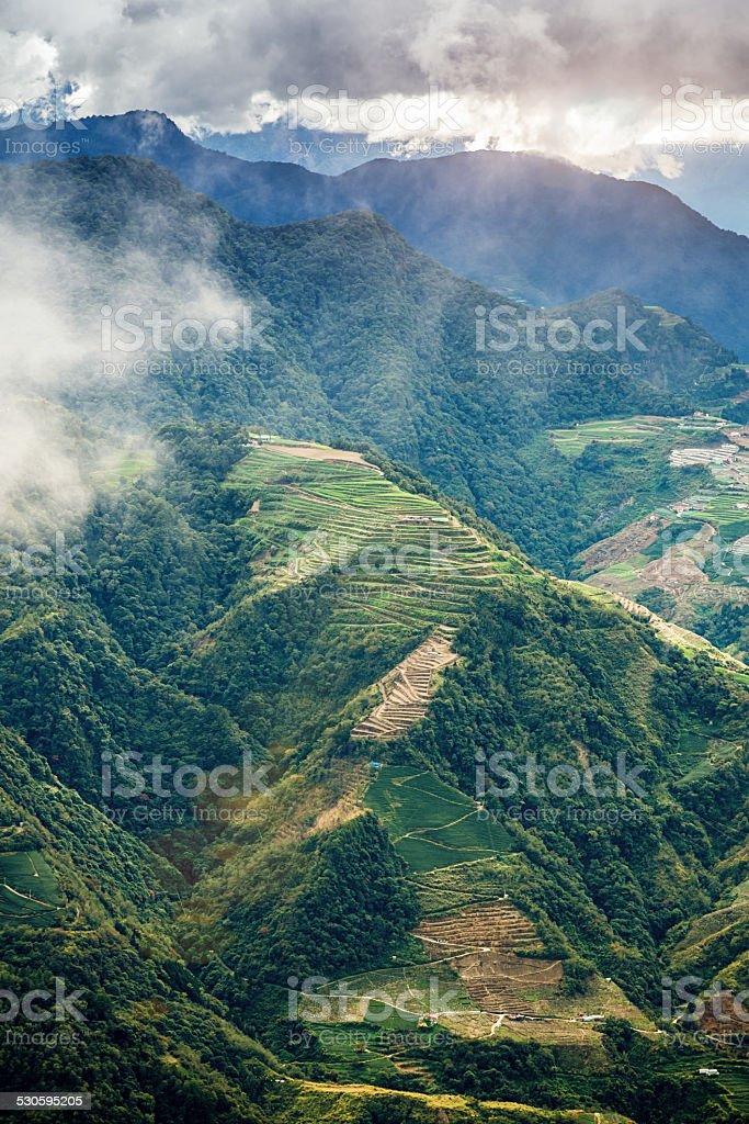 High Mountain Oolong Tea Plantation Taiwan stock photo