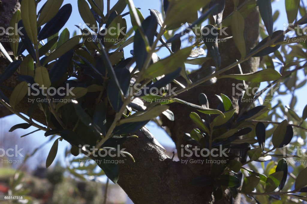 high on lake lago maggiore flowers and plants stock photo