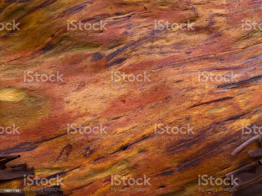 High Resolution Arbutus Tree Texture stock photo
