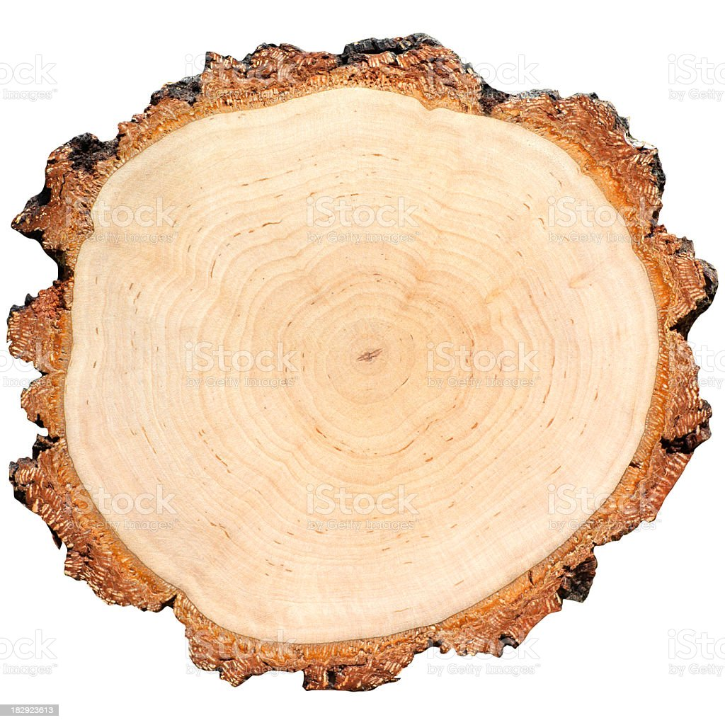 High resolution bird's eye view of tree rings stock photo