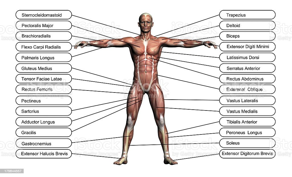 High resolution concept or conceptual 3D human anatomy royalty-free stock photo