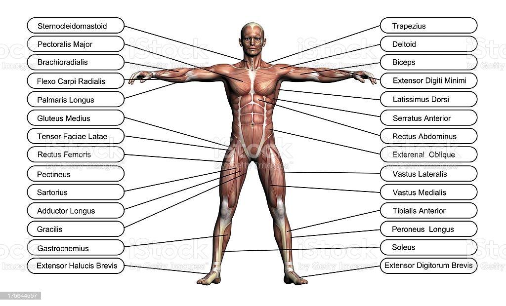 High resolution concept or conceptual 3D human anatomy stock photo