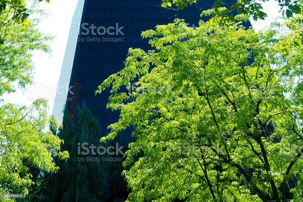 High Rise Skyscrape Monolithr Office Bui;ding, Trees Foreground, stock photo