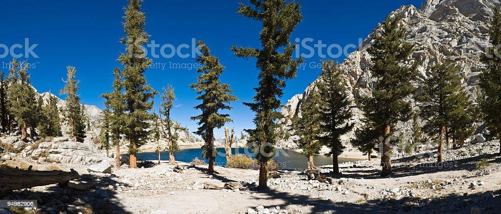 High Sierra lake pines stock photo