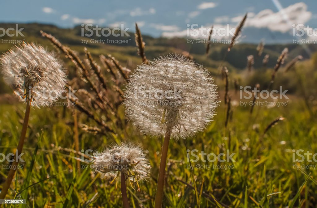 High summer stock photo