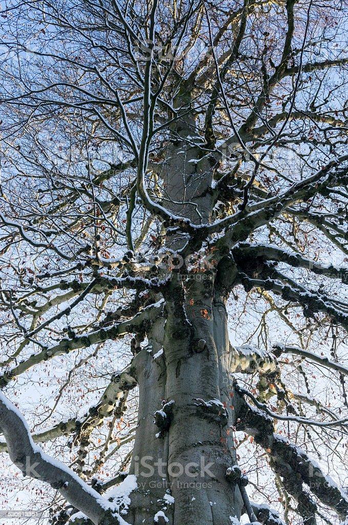 Alta albero e il cielo foto stock royalty-free